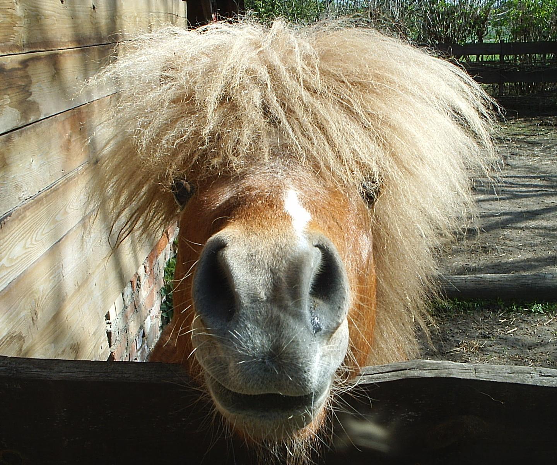 du hast die haare schön
